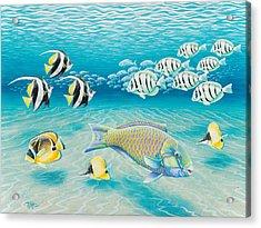 Tropical Fish Acrylic Print by Tish Wynne