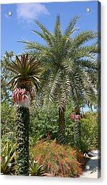 Tropical Garden Acrylic Print by Kim Hojnacki