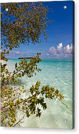 Tropical Island Acrylic Print by Jenny Rainbow