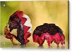 Tropical Mangosteen Acrylic Print by Kaye Menner