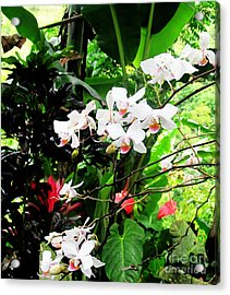 Tropical Orchids Acrylic Print by Tina M Wenger
