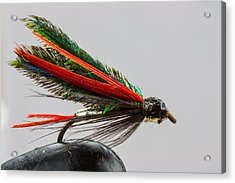 Trout Fly  Acrylic Print by Craig Lapsley