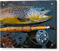 Trout On Fly Acrylic Print by Lina Tricocci