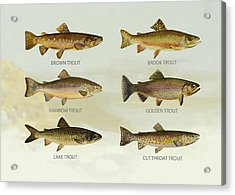 Trout Species Acrylic Print by Aged Pixel