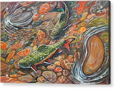 Trout Stream Acrylic Print by Jenn Cunningham