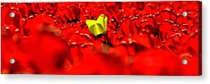 True Color Panorama Acrylic Print by Benjamin Yeager