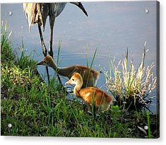 Trying To Catch... Acrylic Print by Zina Stromberg