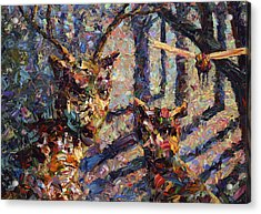 Tryst Acrylic Print by James W Johnson