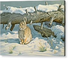 Tucked In Acrylic Print by Paul Krapf