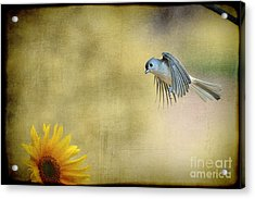 Tufted Titmouse Flying Over Flower Acrylic Print by Dan Friend