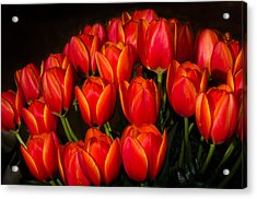 Tulip Bouquet Acrylic Print by Brian Xavier