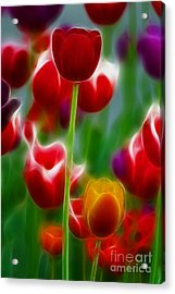 Tulips-7069-fractal Acrylic Print by Gary Gingrich Galleries