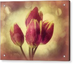 Tulips In The Rain Acrylic Print by Anne Macdonald
