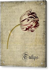 Tulips - S01bt2t Acrylic Print by Variance Collections