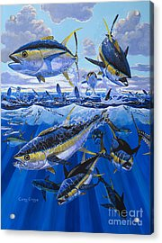 Tuna Rampage Off0018 Acrylic Print by Carey Chen