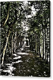 Tunnel Of Trees ... Acrylic Print by Juergen Weiss