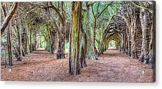 Tunnels Of The Intertwined Acrylic Print by Semmick Photo