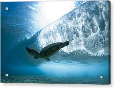 Turtle Clouds Acrylic Print by Sean Davey