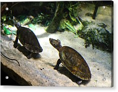 Turtle - National Aquarium In Baltimore Md - 121219 Acrylic Print by DC Photographer