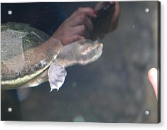 Turtle - National Aquarium In Baltimore Md - 121223 Acrylic Print by DC Photographer