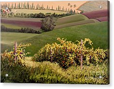 Tuscan Hills Acrylic Print by Michael Swanson