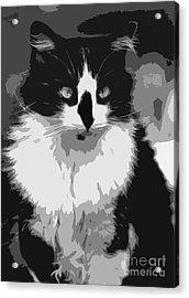 Tuxedo Cat  Acrylic Print by Juls Adams