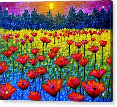Twilight Poppies Acrylic Print by John  Nolan