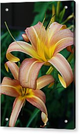 Twin Daylilies Acrylic Print by Bruce Bley