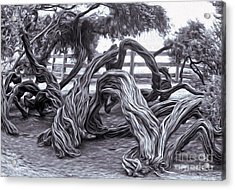 Twisted Tree - 01 Acrylic Print by Gregory Dyer