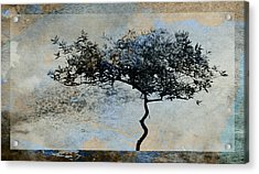 Twisted Tree Acrylic Print by David Ridley