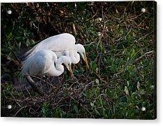 Two Beaks Acrylic Print by Linda Olsen