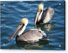 Two Beautiful Pelicans Acrylic Print by Cynthia Guinn
