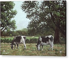Two Cows In Field At Throop Dorset Uk Acrylic Print by Martin Davey
