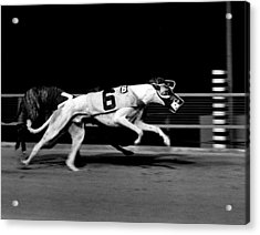 Two Dogs Running Tight Acrylic Print by Retro Images Archive