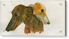 Two Greyhounds Acrylic Print by Juan  Bosco