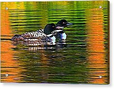 Two Loons Acrylic Print by Pat Now