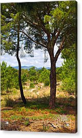 Two Pine Trees Acrylic Print by Carlos Caetano