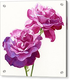 Two Red Violet Rose Blossoms Square Design Acrylic Print by Sharon Freeman