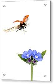 Two Spot Ladybug Acrylic Print by Mark Bowler