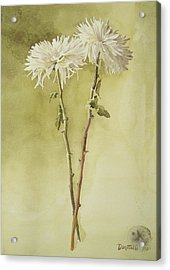 Two White Mums Acrylic Print by Kathryn Donatelli