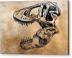 Tyrannosaurus Skull Acrylic Print by Harm  Plat