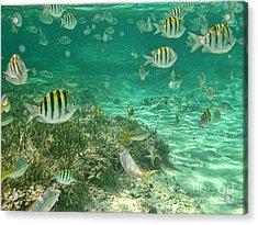 Under The Sea Acrylic Print by Peggy Hughes