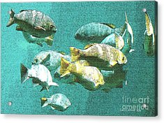 Underwater Fish Swimming By Acrylic Print by Artist and Photographer Laura Wrede