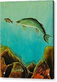 Underwater Predators Panel 1 Acrylic Print by Jeanne Fischer