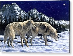 Wolves - Unfamiliar Territory Acrylic Print by Crista Forest