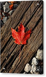 Uniquely Red Acrylic Print by Pamela Baker