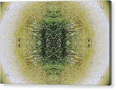 Unnatural 6.1 Acrylic Print by Giovanni Cafagna