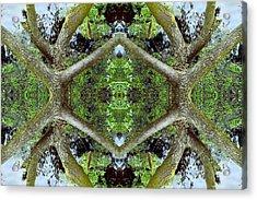 Unnatural 65.2 Acrylic Print by Giovanni Cafagna