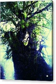 Untitled -tree Star Acrylic Print by Juliann Sweet