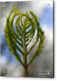 Unwrapped Acrylic Print by Neal  Eslinger